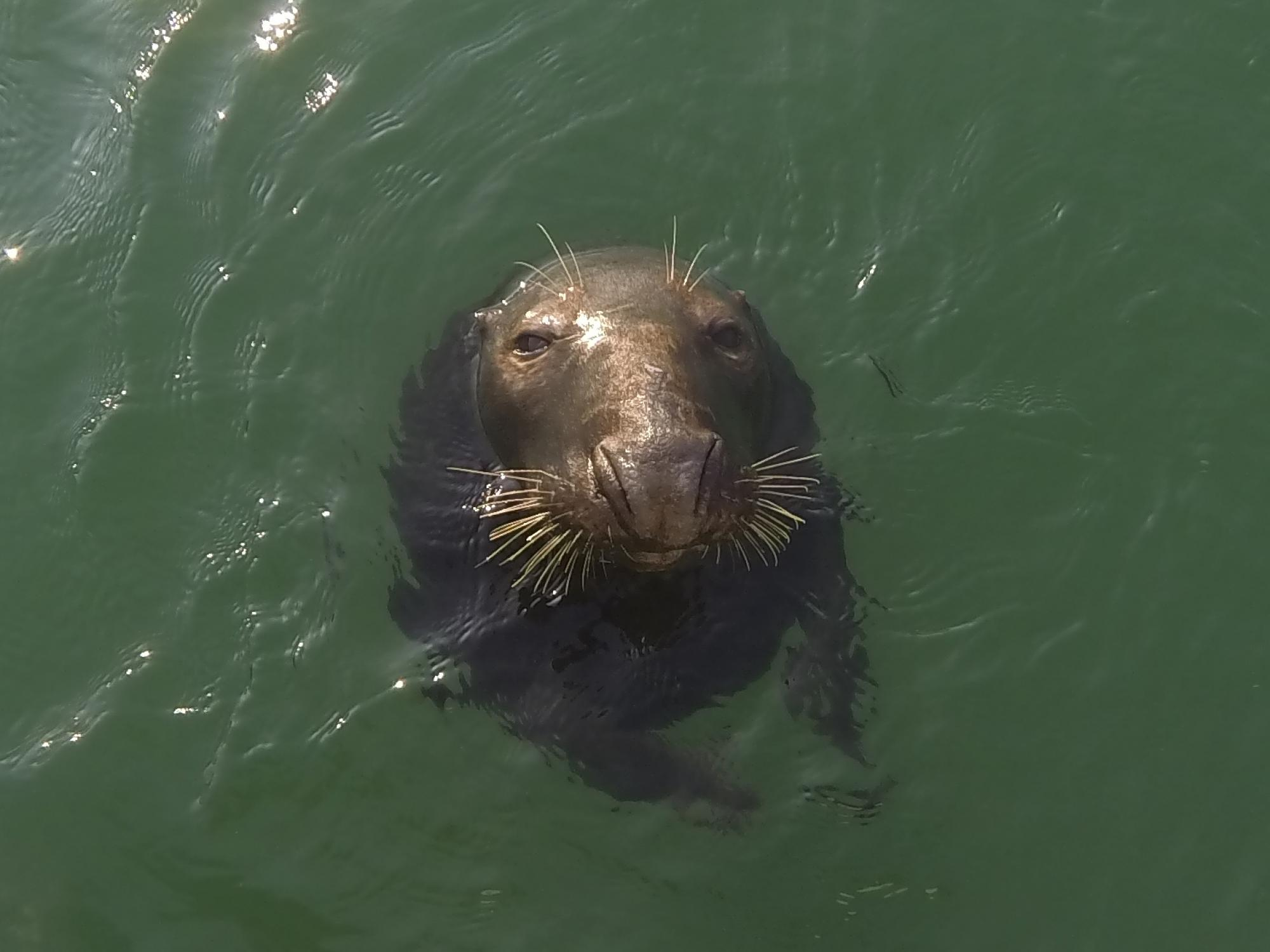 Seal Newquay Harbour